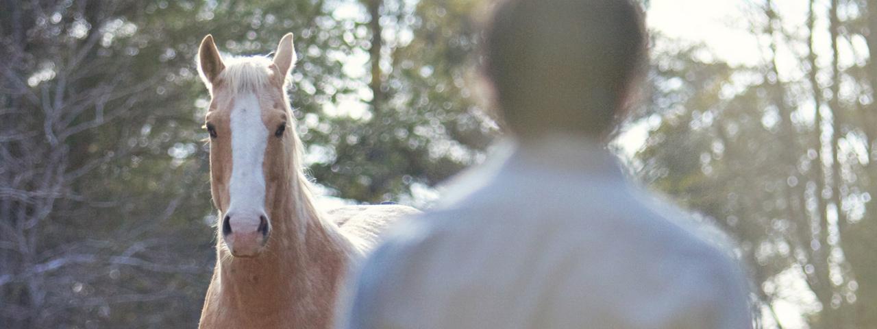How I See Horses